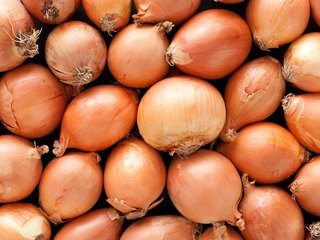 Onions have a weird smell too. But you can use them to get rid of the paint smell. You just have to figure out how to remove the onion smell after that.