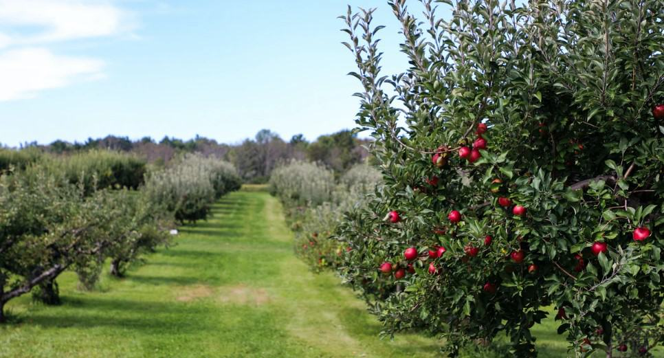 If you are looking for the best ladders for orchards then you came to the right place. We have made a list and we tried our best to explain all the features. You should check it out if you are looking to pick your fruits with orchard ladders.